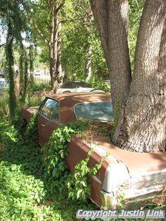 trees growing through an old car - Google zoeken