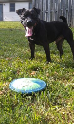 He loves his frisbee! <3