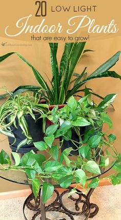 This low light indoor plant list gives tons of options for houseplants that are easy to grow, low maintenance, and they're all gorgeous too!