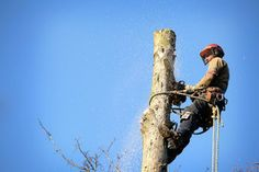 Regardless of how a tree leans, proper felling techniques can bring down a tree in nearly any direction. It is simply a matter of skill, experience and the right tools.