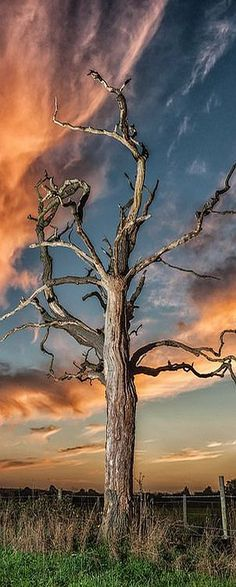 Sunset of a dead tree #by jerry_lake  on flickr.com