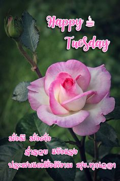 Good Morning Wishes Quotes, Wish Quotes, Happy Tuesday