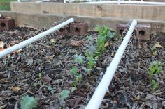 Simple pic drip irrigation for garden