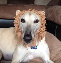 Hey, I found this really awesome Etsy listing at https://www.etsy.com/listing/190674139/lion-made-to-order-snood-hat-for-dogs