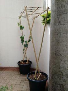 Verticalizando o jardim / horta. Treliça para tomateiros, pepinos, vagens, chuchus, ervilhas.    Fotografia: Horta Caseira.