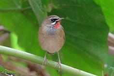 Starling, Field Guide, Little Birds, Bird Feathers, Alaska, Holland, Animals, Sparrows, Hummingbirds