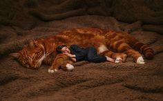 Классные фотографии любительниц кошек со своими питомцами
