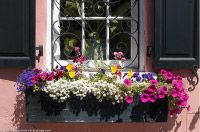 I would love to have window boxes
