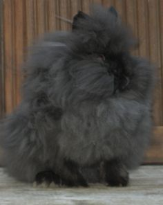 Want one so bad Crazy Animals, Animals For Kids, Lionhead Rabbit, Silly Rabbit, Funny Farm, House Rabbit, Bunny Rabbits, Funny Bunnies, Adorable Animals