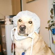 "What I think of when someone says ""my dog just got out of surgery"""