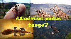 Video-libro muy entretenido sobre los animales y cómo se mueven: ¿Cuánta...