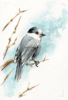 Gray Jay Watercolor Painting OSWOA by KetturahsArt on Etsy, $20.00