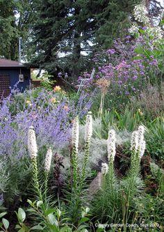 Gay Feather, Dense Blazing Star 'Floristan White'  Liatris spicata