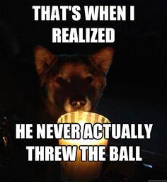 Funny Captions, part 4 funny captions funny humor funny memes animal funny pictures captions Funny Animals With Captions, Funny Animal Photos, Funny Captions, Funny Pictures, Animal Memes, Animal Quotes, Animal Funnies, Animals Photos, Animal Pics