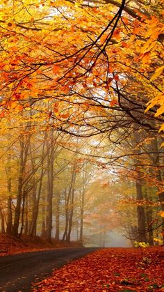 """Képtalálat a következőre: """"őszi háttérképek számítógépre ingyen"""""""