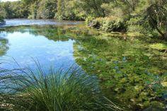 pupu springs golden bay new zealand travel