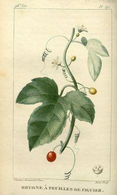 Flore médicale des Antilles, Paris :Pichard,1821-1829