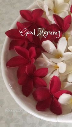 Good Morning Nature, Good Morning Images Flowers, Good Morning Beautiful Images, Good Morning Prayer, Good Morning Photos, Good Morning Good Night, Morning Qoutes, Morning Greetings Quotes, Monday Greetings