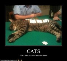 You have to work around having a cat! You Have To - LOLcats is the best place to find and submit funny cat memes and other silly cat materials to share with the world. We find the funny cats that make you LOL so that you don't have to. Funny Animal Pictures, Funny Animals, Cute Animals, Funny Photos, Funny Dogs, Funny Horses, Animal Fun, Baby Cats, Cats And Kittens