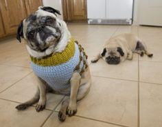 YOU GIVE THAT SAD PUG A SWEATER VEST NOW!