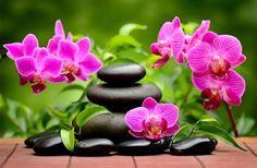 Als dankbar erweist sich schon, wer dem Geber freundlich sich zuneigt, wie auch die Blüte, die ihre Schönheit der Spenderin Sonne anmutig da...