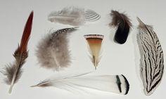 Veren Decoration, Gifts, Decor, Presents, Decorations, Favors, Decorating, Gift, Dekoration