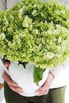A Country Farmhouse: Hydrangea Hortensia Hydrangea, Limelight Hydrangea, Hydrangea Bush, Green Hydrangea, Hydrangeas, Hydrangea Plant, Hydrangea Centerpieces, Hydrangea Varieties, Lilacs