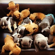 Pile of puppies..... I want nothing more than to be buried under them.