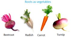 Roots as Vegetables - Info page on different edible parts of the plant including instructions Tea Plant, Coffee Plant, Cereals And Pulses, How Plants Grow, How To Make Oil, Coffee Uses, Spring Plants, Parts Of A Plant, Fruit In Season