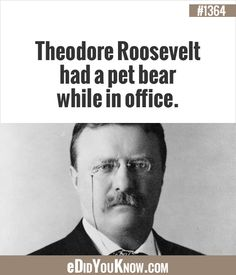 Theodore Roosevelt had a pet bear while in office. Let It Out, The More You Know, Good To Know, Did You Know, Weird Facts, Fun Facts, Random Facts, Random Stuff, Theodore Roosevelt
