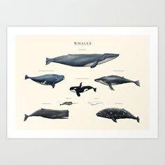 W H A L E S Art Print by Sam Lyne