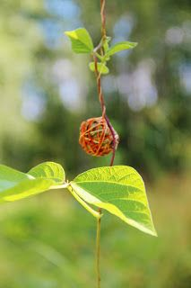 poppyshome - - - poppys.fi
