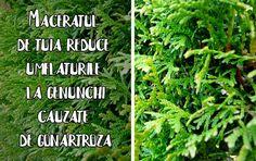 Herbs, Outdoor Structures, Herb, Medicinal Plants