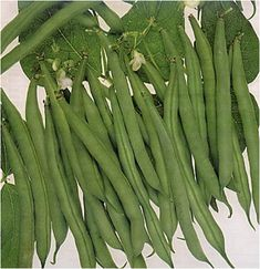 Asparagus, Vegetables, Gardens, Fruits And Vegetables, Studs, Outdoor Gardens, Vegetable Recipes, Garden, Veggies