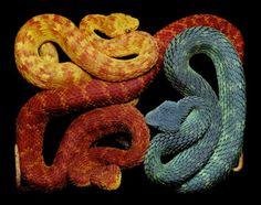 Impresionantes fotos de serpientes por Guido Mocafico