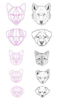 How to draw dogs and wolf
