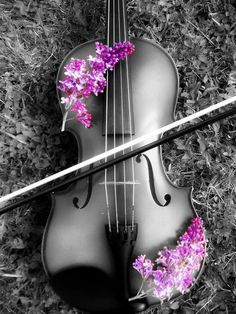 There's one main light source in this image that really highlights the sheen the violin has. The pink flowers accent the dramatic lighting by framing it and making it pop. The source looks like it coming from an angle and it feels more dramatic than if it was just a frontal light
