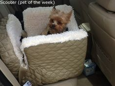 Check out our pet of the day/week.  This is Scooter.  His Mom bought him this great Snoozer car seat from us last week.   Now he's got a super comfy safe ride.   Isn't he too cute?