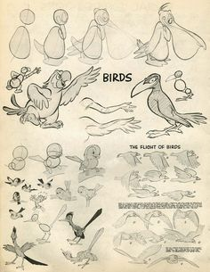Advanced Animation (Part Model Sheets) by Preston Blair Does that first character look familiar? Bambi's Friend Owl was animated by both Preston Blair and Eric Larson. Cartoon Characters Sketch, Cartoon Sketches, Cartoon Kunst, Cartoon Art, Bird Drawings, Animal Drawings, Drawing Faces, Character Drawing, Character Illustration