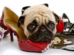 Google Image Result for http://www.petside.com/sites/default/files/imagecache/fullsize_article/mom-dog-card-funny.jpg