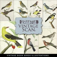 Far Far Hill: New Freebies Vintage Book Illustrations