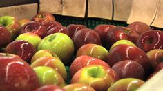 Fall brings cool weather and colorful leaves, along with thousands of tourists who flock to North Georgia to see the sites and to taste some of the sweetest apples around. The Monitor's Kenny Burgamy visited one of Georgia Farm Bureau's Certified Farm Markets that has a long history with the apple orchards in Gilmer County.