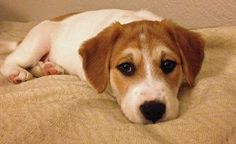 SPLASHDUCK sharing cute adorable animal pictures and awesome related websites. Otto the Mixed Breed