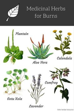Some herbal remedies that are well known to help burns. These six plants are used in herbology for burns and include plantain aloe Vera calendula gotu kola lavender and comfrey. Read up on these amazing herbs for the next time you get burned. Natural Health Remedies, Natural Cures, Natural Healing, Herbal Remedies, Natural Foods, Natural Treatments, Natural Oil, Holistic Healing, Cold Remedies