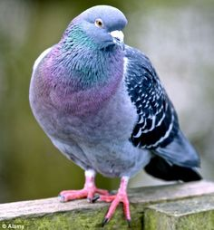 Chinese magnate pays world record $328k for pigeon at ...