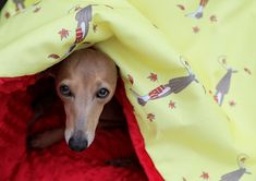 AUTUMN PRIDE BAG Description: Cousy IG sleeping bag made from a high quality material (outside), Grammage: with a plush interior lining, polar minky. Us Store, Fluffy Dogs, New Beds, Italian Greyhound, Sleeping Bag, Bag Making, Pride, Plush, Comfy