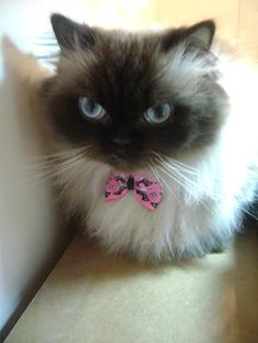 coco the cat!