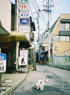 Cat in the street in Japan