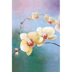 Found it at Wayfair - Orchids by G. Salman Graphic Art on Wrapped Canvas