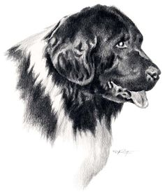 #Newfoundland #Newfie #NewfoundlandArt Dog Pencil Drawing, Pencil Drawings Of Animals, Drawing Art, Schipperke Dog, Newfoundland, Easy Drawings, Giclee Print, Art Prints, Dj